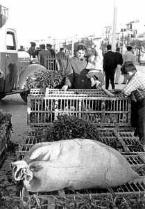 Una mujer mira un cargamento de aves listo para embarcar. A. Schwarz