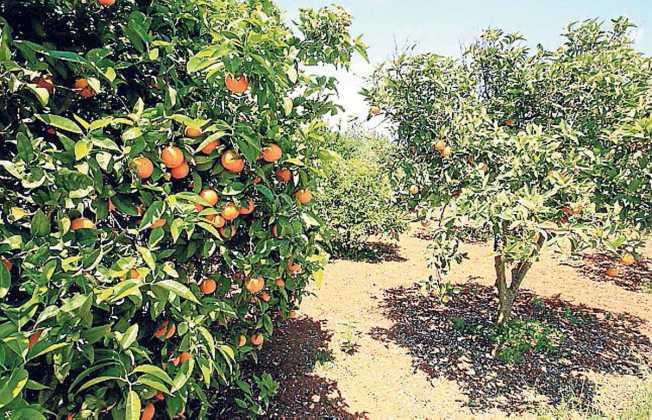 Naranjas, mandarinas y clementinas de temporada. SERGIO G. CAÑIZARES
