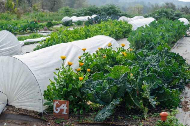 Cultivos en una huerta ecológica de la isla. SERGIO G. CAÑIZARES