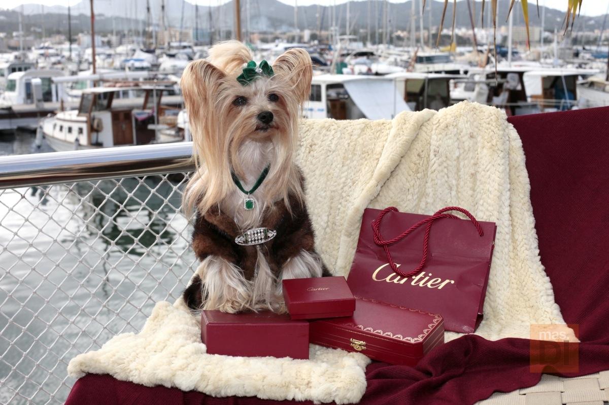 Una perrita con joyas de Cartier y bolsos de Gucci