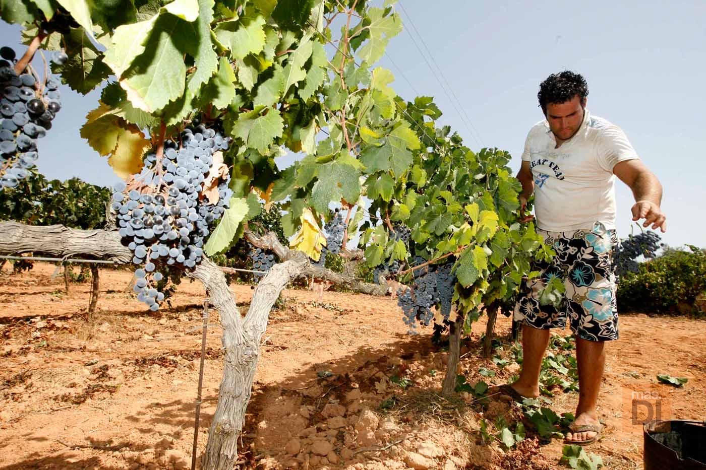 Tierras de buen vino
