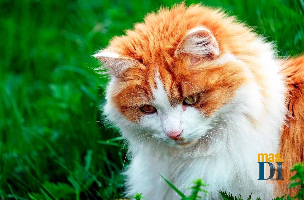 La nueva pipeta que protege a los gatos de pulgas y garrapatas