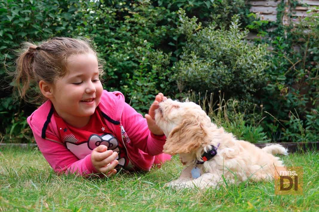 Los niños con mascotas tienen menor riesgo de alergias y obesidad