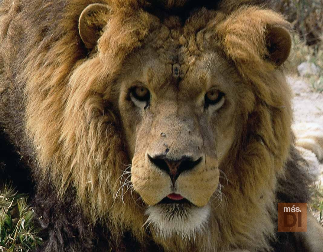 Mascotas. Arca de Noé. A león muerto, negocio puesto