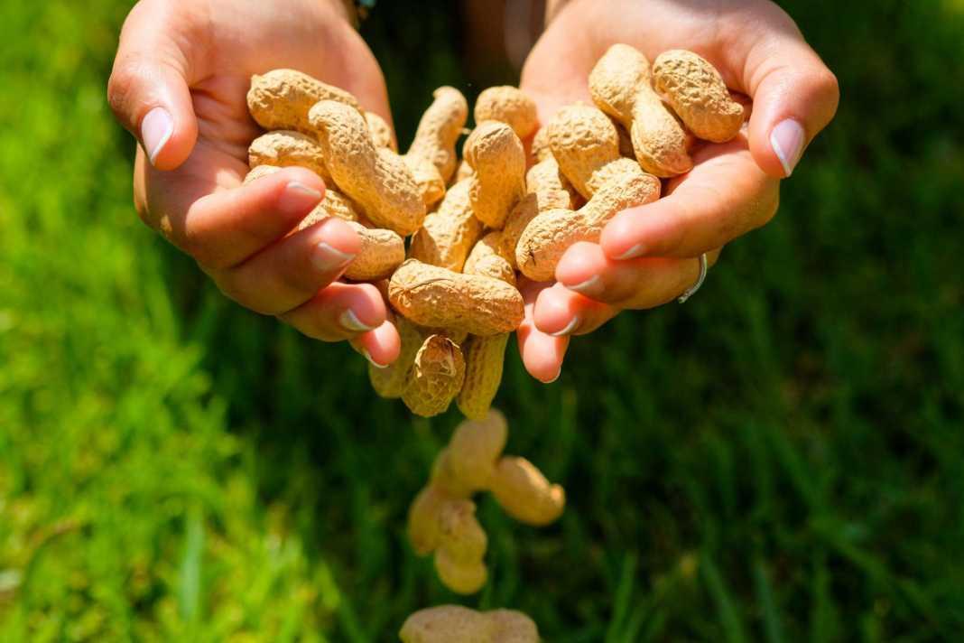 La alergia a los frutos secos es una de las alergias alimentarias más frecuentes.