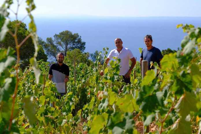 ibizkus vinos de ibiza