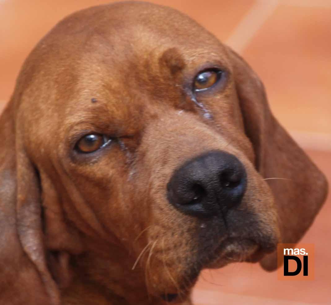 Mascotas. Arca de Noé. Cinco acciones fundamentales para salvar a un animal maltratado