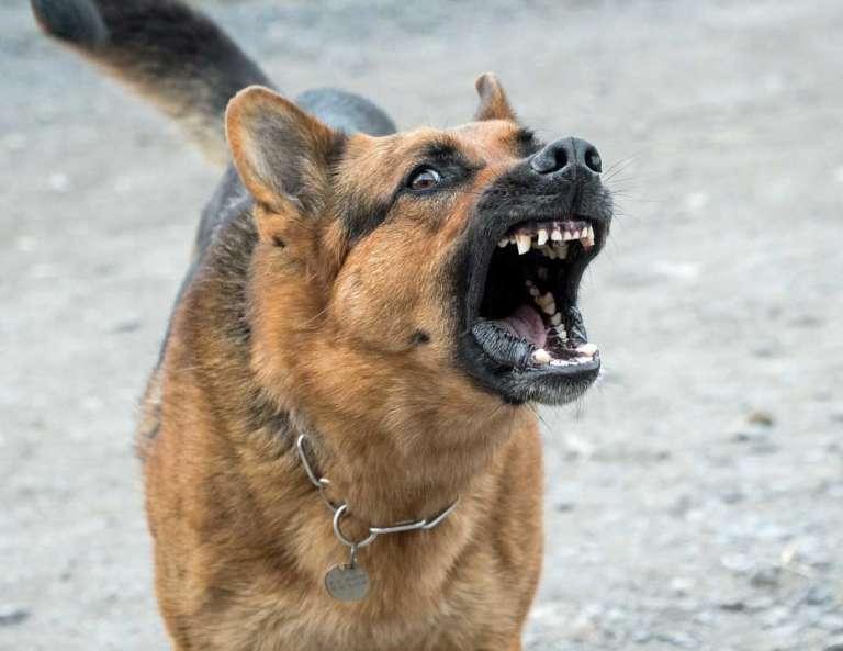 Mascotas. Arca de Noé. Nueva forma de maltrato: dejar mudo a un perro