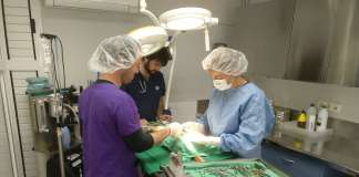 Cirugía rutinaria realizada por el equipo de la Clínica Veterinaria Kans