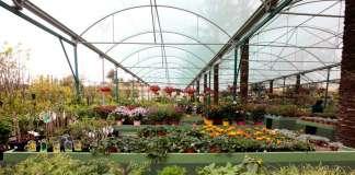 Proyectos de jardinería. Diseño integral de jardines, y un amplio surtido de plantas. s.g.c.