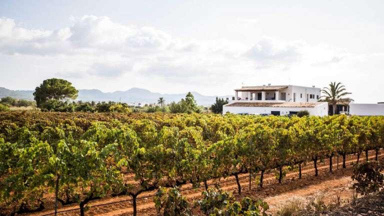 Vinos ecológicos premiados en Ibiza