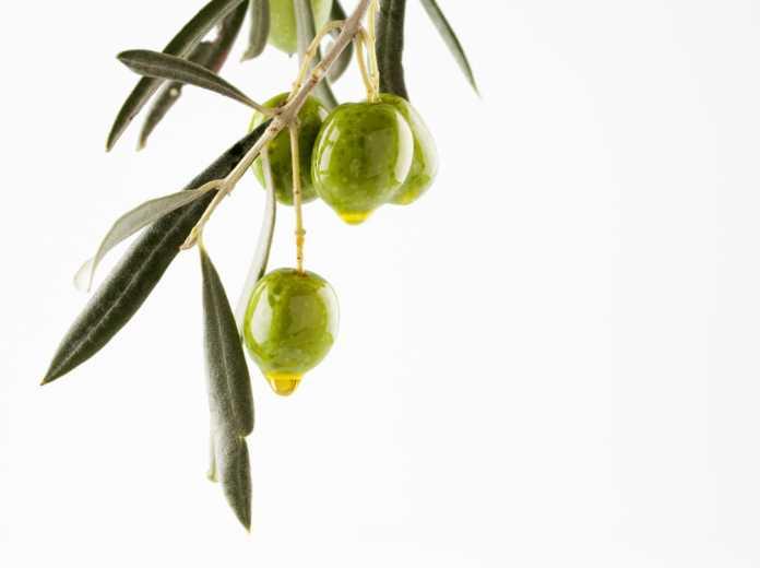El aceite de oliva es la principal grasa de esta dieta. Foto: shutterstock
