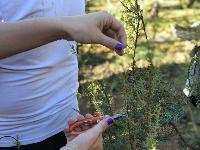 Taller de hierbas ibicencas en Ibiza