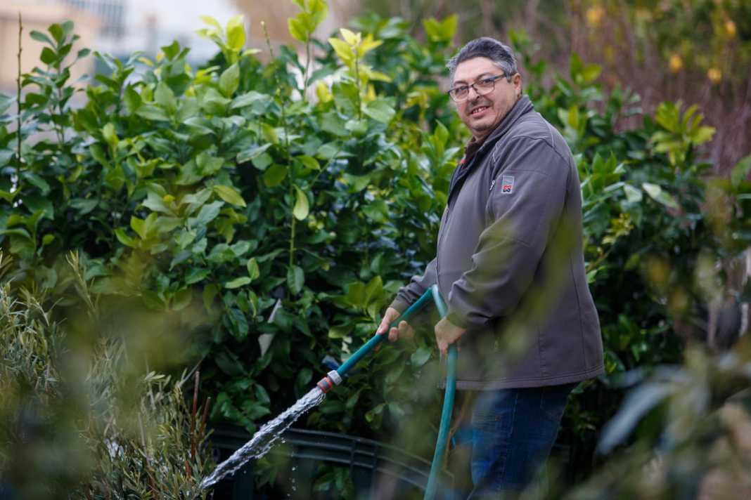 Un trabajador riega las plantas del vivero.
