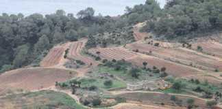 Imagen de una extensión de bosque y una zona agrícola en es Cubells.