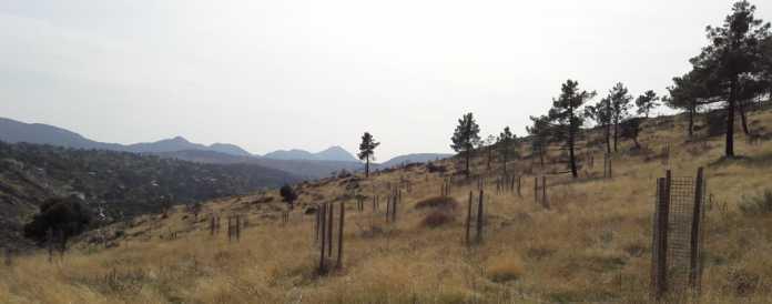 La iniciativa 'Bosque Endesa' tiene como objetivo la restauración forestal de espacios degradados.