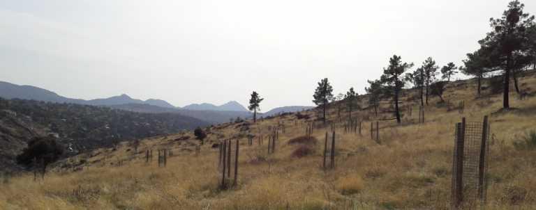 Restauración forestal con premio
