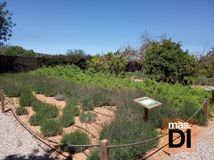 Celebra la primavera con un taller de hierbas ibicencas en Fluxà Ibiza | másDI - Magazine