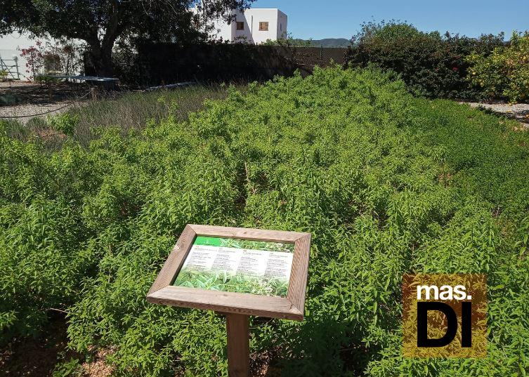 Celebra la primavera con un taller de hierbas ibicencas en Fluxà Ibiza   másDI - Magazine