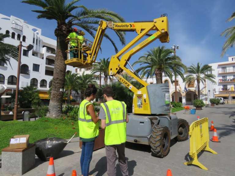 Protección frente al picudo en Ibiza