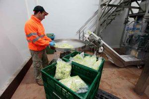 Proceso de envasado de las hortalizas.