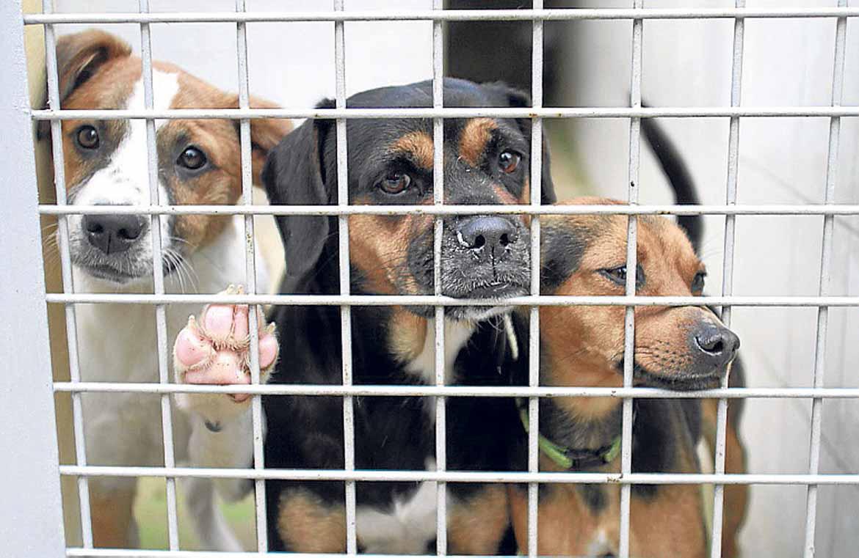 Tres perritos comparten espacio. | Gabi Vázquez
