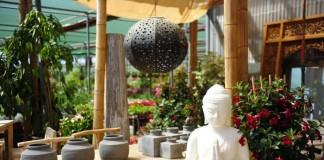 Gran variedad de plantas y elementos decorativos. GABI Vázquez