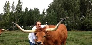 [:es]José Gordón posa con uno de los bueyes en su granja de León. Su carne está valorada como las mejores del mundo.[:]