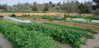 El consumo de productos ecológicos ha aumentado en Eivissa en los últimos años. SERGIO G. CAÑIZARES