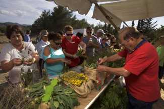 Selección de hierbas en el taller celebrado este año por la asociación de vecinos de Can Tomàs. © JOAN COSTA