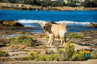 Las pólizas pueden cubrir también los gastos veterinarios de las mascotas. S.G.C.