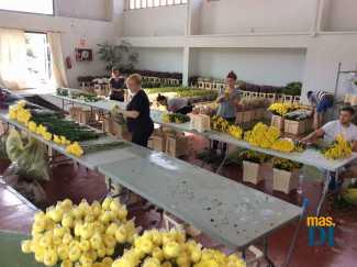 El equipo de Seguí elaborando ramos en Eivissa con flor natural de temporada. Una trabajo duro y complicado pero a la vez muy creativo y de gran vistosidad decorativa.