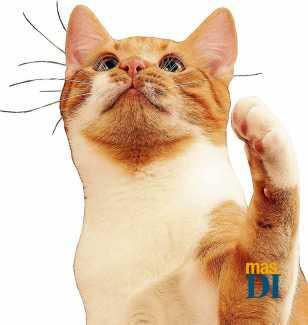 Un buen pienso, el mejor alimento para gatos y perros | másDI - Magazine