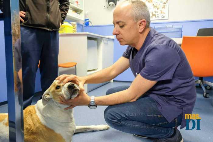 Clinica veterinaria San Jorge, los mejores cuidados para su mascota