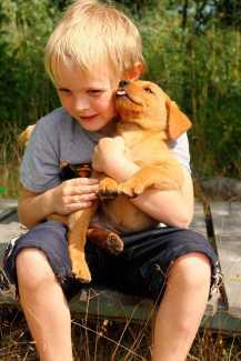 Los niños con mascotas tienen menor riesgo de alergias y obesidad   másDI - Magazine