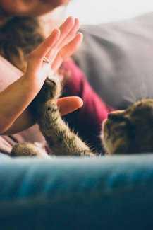Cala: la setter que encontró  un hogar gracias a Facebook | másDI - Magazine