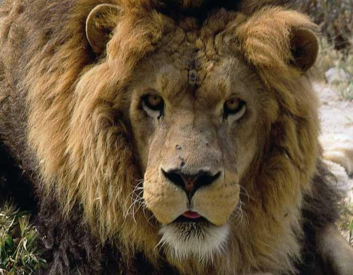 Mascotas. Arca de Noé. A león muerto, negocio puesto   másDI - Magazine