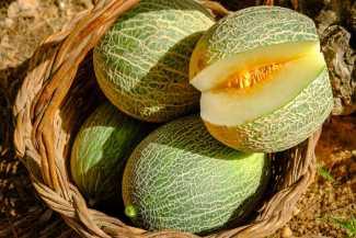 Melones programa Leader