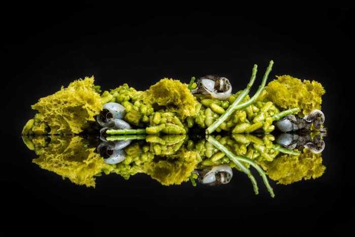 Grupo Pacha. Un menú muy especial para sumergirse en los sabores del mar | másDI - Magazine