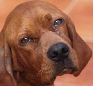 Mascotas. Arca de Noé. Cinco acciones fundamentales para salvar a un animal maltratado | másDI - Magazine