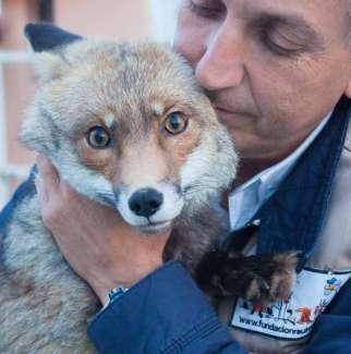 Mascotas. Arca de Noé. Cuando un centro de rescate cierra, ¿qué ocurre con los animales? | másDI - Magazine