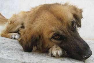 Mascotas. Arca de Noé. ¿Pueden enamorarse los perros o los gatos? | másDI - Magazine