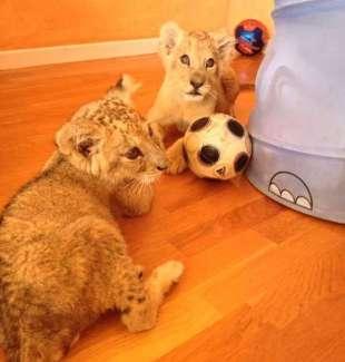 Mascotas. Arca de Noé. ¿Circos con animales? No, gracias