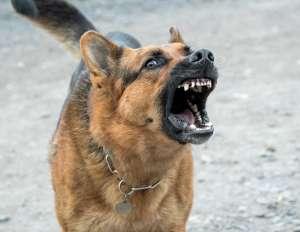 Mascotas. Arca de Noé. Nueva forma de maltrato: dejar mudo a un perro | másDI - Magazine