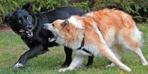 Mascotas. Arca de Noé. Si quieres proteger a los animales, compra un fusil | másDI - Magazine