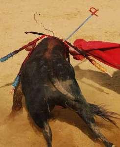 Mascotas. Arca de Noé. Once meses  de maltrato y uno de protección animal | másDI - Magazine