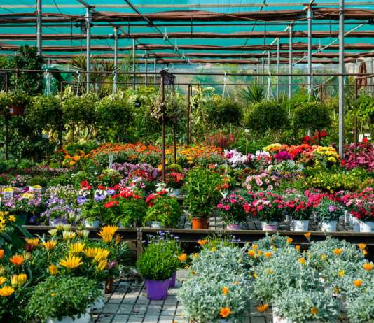 Mantenimiento de jardines.Agua y Jardín dispone de más de 25.000 m2 de terreno en Sant Jordi.