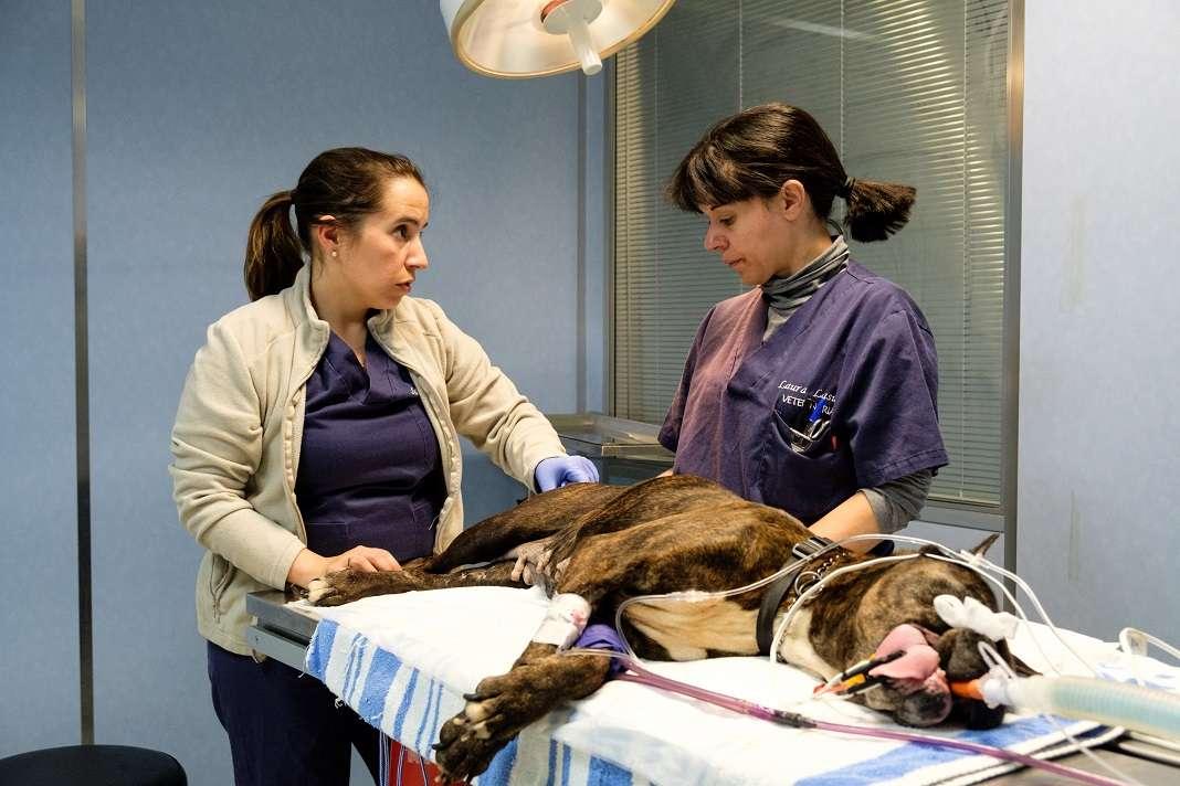 Silvina Guerrini y Laura Lasuén en la consulta. Fotos: Sergio G. Cañizares