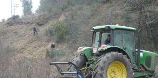 limpieza de masa forestal en Ibiza
