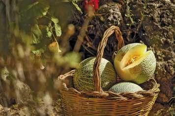 Los productos frescos, ecológicos y de la tierra forman parte de la oferta culinaria a pie de arena.